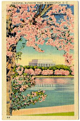 Vintage postcard with Cherry Blossom Festival image